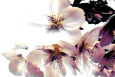 flower016