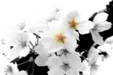 flower018