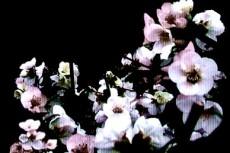 flower019