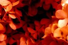 flower027