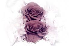 flower043