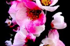 flower047