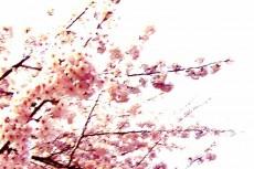 flower050