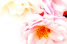 flower054