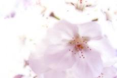 flower056