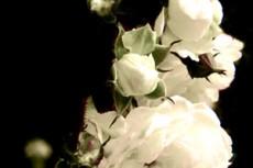 flower059