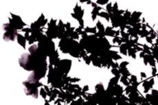 flower061