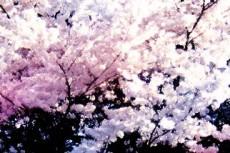 flower064