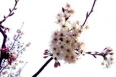 flower068