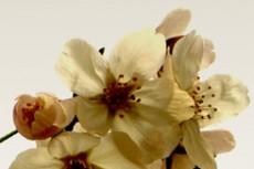 flower071