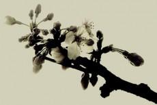 flower072
