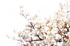flower076