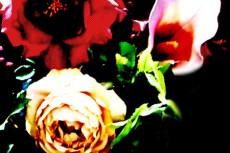 flower079