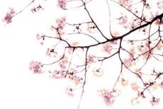 flower087