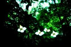flower097
