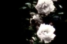 flower099