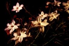 flower100