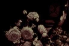flower101