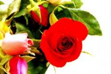 flower109