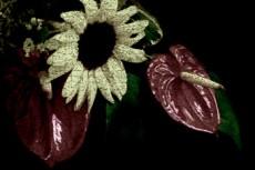 flower116