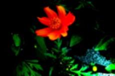 flower121