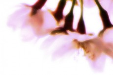 flower124