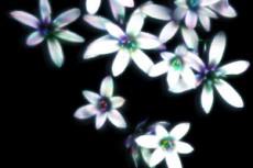 flower126
