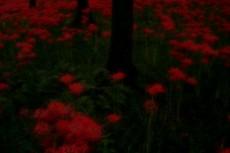 flower132