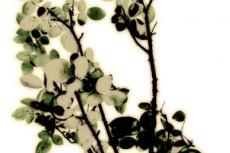 flower136