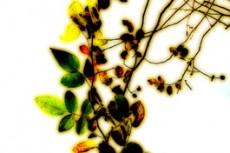 flower140
