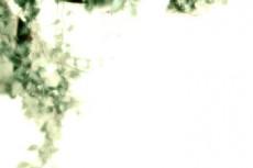 flower141