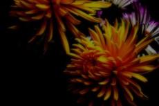 flower142