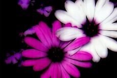 flower180