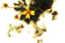 flower183