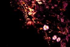 flower186