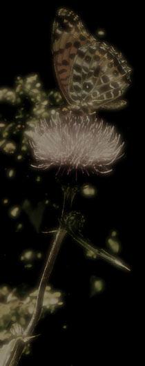 花と蝶の写真素材