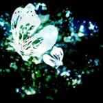 ペンキで描かれたような白い蝶(4パターン)