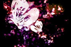 norepeat-butterfly006_2
