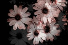 norepeat-flower004_2