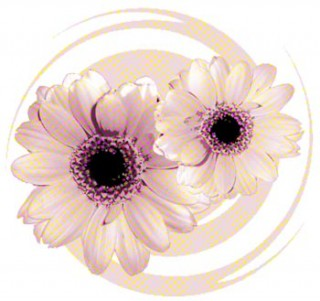 渦巻きとガーベラ(3パターン)