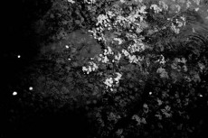 norepeat-flower014_4