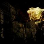 ゴシックな雰囲気の鉄格子付き窓と薔薇(3パターン)
