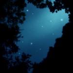 木々の間に空いた星空(2パターン)