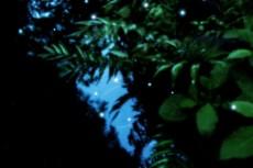 norepeat-waterside005