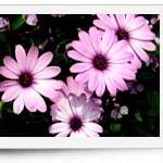 紙がめくれたような写真素材 花(19パターン)