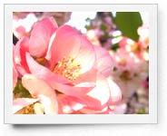 peper-curl-flower002