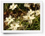 peper-curl-flower009