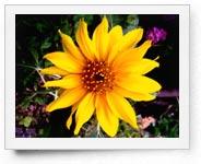 peper-curl-flower011