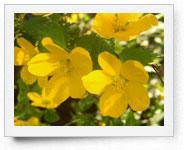 peper-curl-flower012
