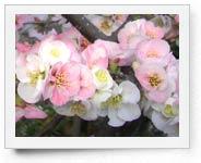 peper-curl-flower016
